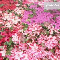 Wachstuch Fotodruck Blüten bunt I 130 cm x 140 cm
