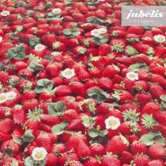 Wachstuch Erdbeeren I 100 cm x 140 cm